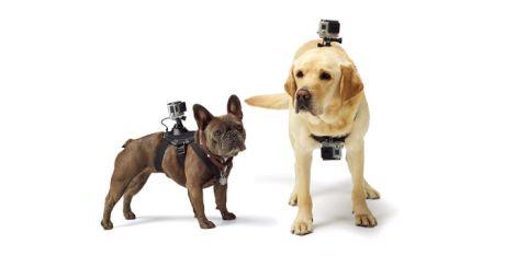 dog hardnes gopro2