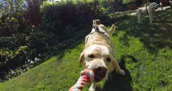 dog hardnes gopro4